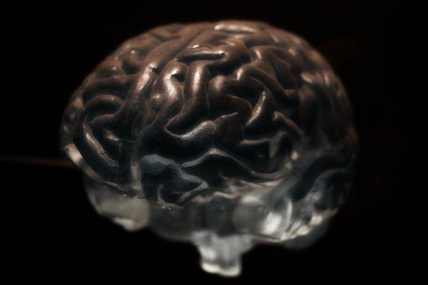 Ученые: Анатомия мозга у каждого человека уникальна