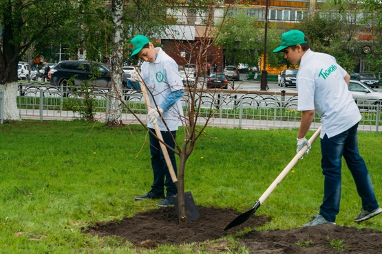 Скверы, парки и вынужденный снос: тюменские депутаты обсудили проблемы озеленения города