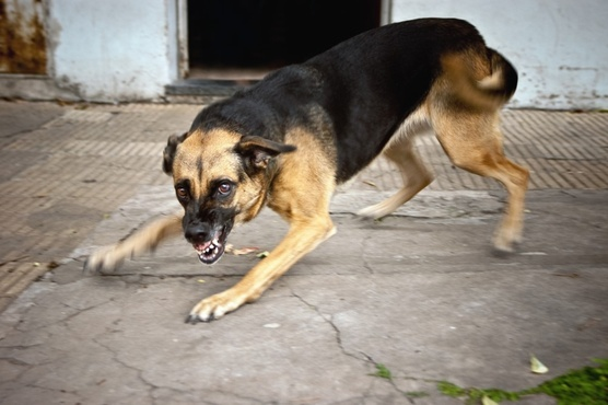 Тюменку сильно покусала собака: пес находился на самовыгуле