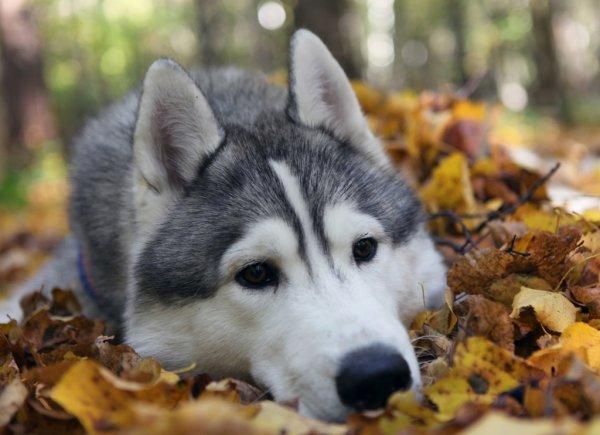 Ученые назвали малоизвестную болезнь, которая убивает собак за 15 минут