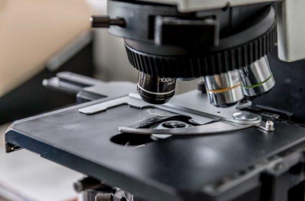 Ученые изобрели микроскоп для измерения мышечной слабости