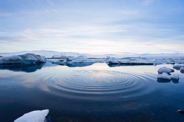 В Арктике обнаружены следы теплолюбивых деревьев
