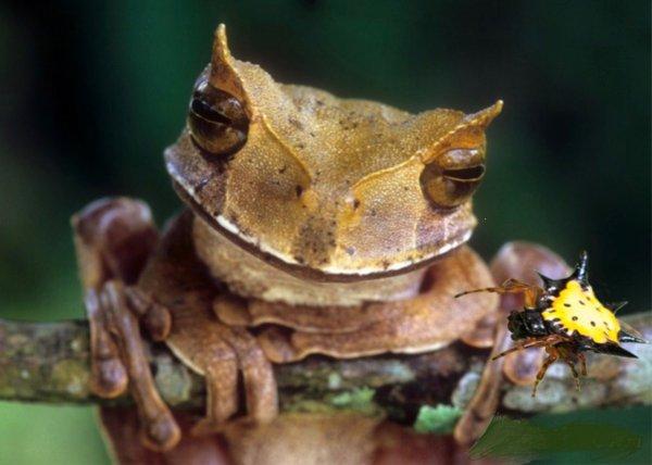 В Эквадоре обнаружили редкий вид лягушки