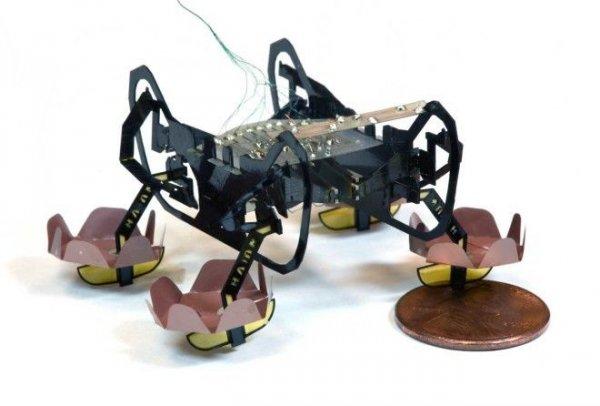 Ученые научили робота-таракана и робота-гусеницу ползать по наклонной поверхности