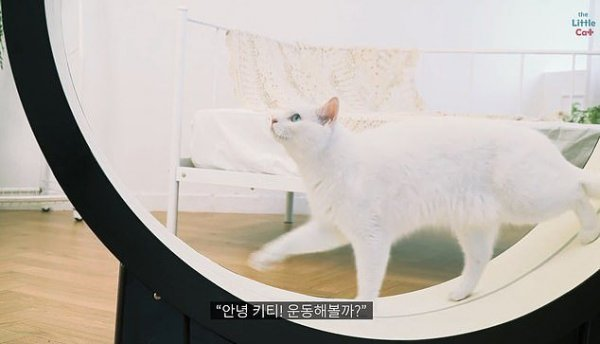 Корейские ученые показали «умную» беговую дорожку для кошек