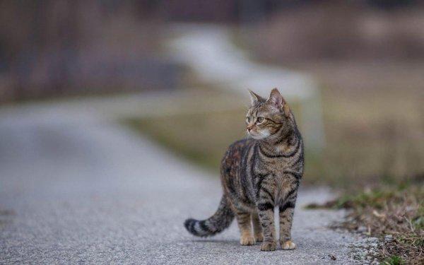 «Даже котики знают ПДД!»: Соблюдающий правила кот попал на видео и умилил сеть