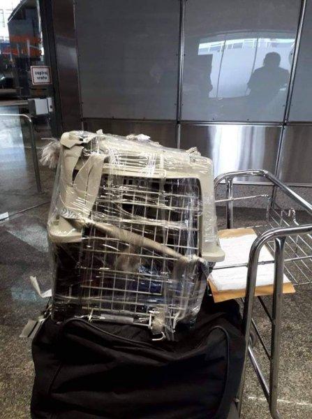 «Позорная компания»: Пассажиры Аэрофлота возмущены стеклом в еде