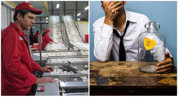 На грани банкротства: Крупнейший производитель яиц в России становится неплатежеспособным