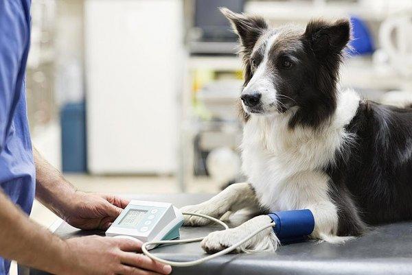 Рейтинг ветеринарных клиник Москвы